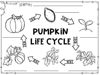 Pumpkin Life Cycle Bulletin Board Set with Recording Sheets : Fall Activities