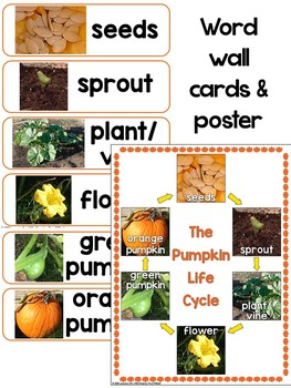 Pumpkin Life Cycle Bundle (PowerPoint, Cards, Craft, Printables) Real Photos