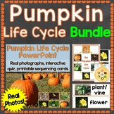 Pumpkin Life Cycle Bundle (PowerPoint, Cards, Craft, Print