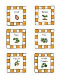 Pumpkin Life Cycle Cards