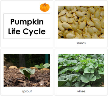 Pumpkin Life Cycle Cards - Toddler