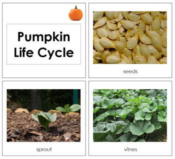 Pumpkin Life Cycle Cards - Toddler