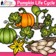 Pumpkin Life Cycle Clip Art {Fall Plant Graphics for Science Activities}