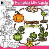 Pumpkin Life Cycle Clip Art {Fall Plant Graphics for Scien