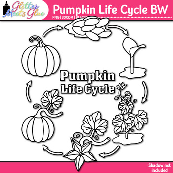 Pumpkin Life Cycle Clip Art {Fall Plant Graphics for Science Activities} B&W