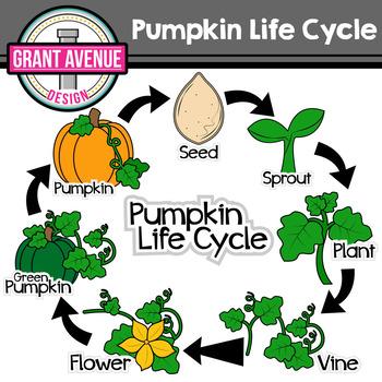 Pumpkin Life Cycle Clipart