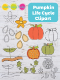Pumpkin Life Cycle Clipart