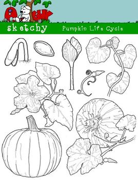 Pumpkin Life Cycle Clipart, Graphic - 300dpi Color Grayscale Black Lined
