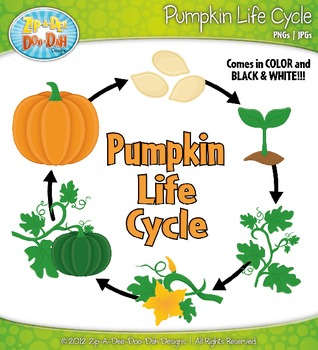 Pumpkin Life Cycle Clipart {Zip-A-Dee-Doo-Dah Designs}