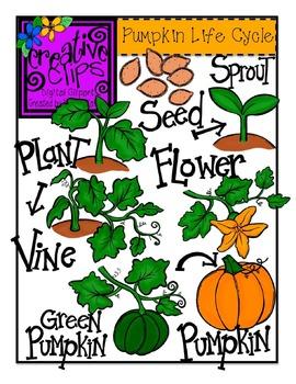 Pumpkin Life Cycle {Creative Clips Digital Clipart}