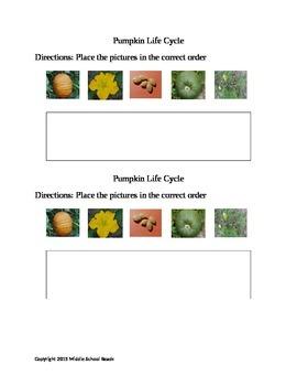 Pumpkin Life Cycle Cut and Glue
