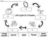Pumpkin Life Cycle Cut and Paste