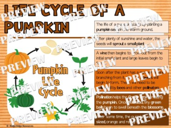 Pumpkin Life Cycle Factball and Fact Sheet