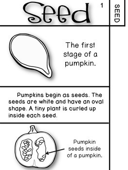 Pumpkin Life Cycle - Flip Book Activity