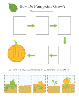 Pumpkin Life Cycle - How does a pumpkin grow?