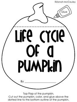 Pumpkin Life Cycle (Interactive)