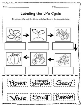 Pumpkin Life Cycle Labeling