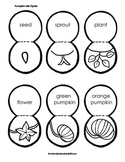 Pumpkin Life Cycle Lesson Plan