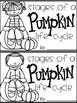 Pumpkin Life Cycle Mini Book