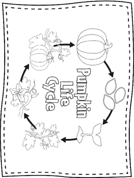 Pumpkin Life Cycle Mini Book & Activities