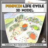 Pumpkin Life Cycle Model - 3D Model - October Science