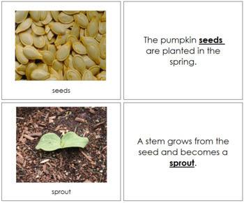 Pumpkin Life Cycle Nomenclature Book