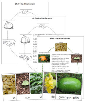 Pumpkin Life Cycle Nomenclature Cards and Charts
