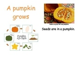 Pumpkin Life Cycle Nonfiction Book