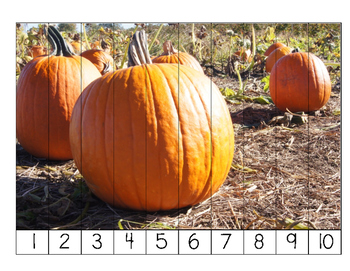 Pumpkin Life Cycle Number Puzzles