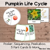 Pumpkin Life Cycle Pack With Real Photos Fall Montessori Preschool Science