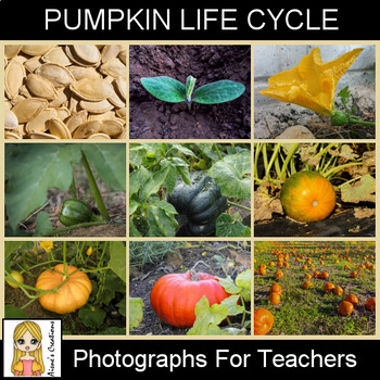 Pumpkin Life Cycle Photograph Pack