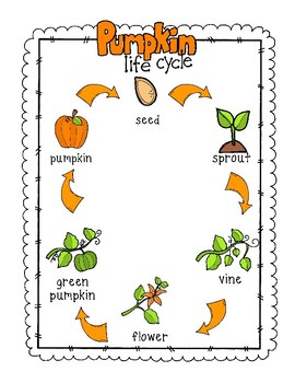 Pumpkin Life Cycle Poster