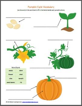 Pumpkin Life Cycle Printable Packet