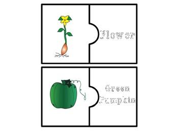 Pumpkin Life Cycle Puzzles