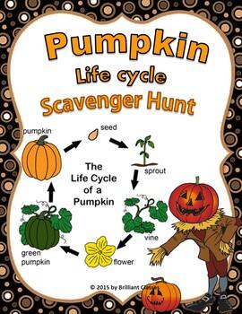 Pumpkin Life Cycle Scavenger Hunt..