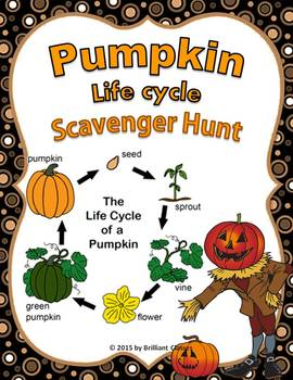 Pumpkin Life Cycle Scavenger Hunt