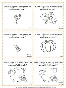Pumpkin Life Cycle Share Share Switch