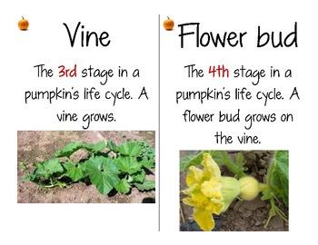 Pumpkin Life Cycle Vocabulary Cards