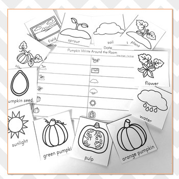 Pumpkin Life Cycle Vocabulary Practice - Write The Room