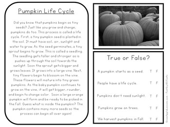 Pumpkin Life Cycle Worksheet By Green Apple Lessons Tpt