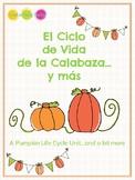 Pumpkin Life Cycle and More - El Ciclo de la Calabaza y Más