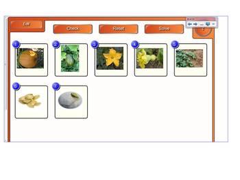 Pumpkin Life Cycle for SmartBoard