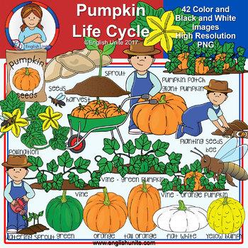 Clip Art - Pumpkin Life Cycle
