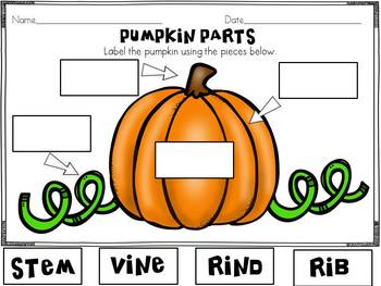 Pumpkin Life Cycle and Investigation