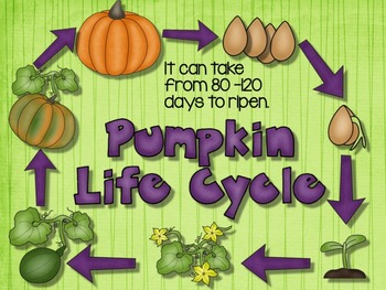 PUMPKIN LIFE CYCLE WITH SLIDESHOW, SCIENCE LITERACY, AND MATH