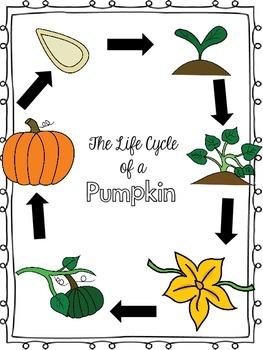 Pumpkin Mini Unit