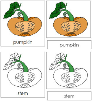 Pumpkin Nomenclature Cards