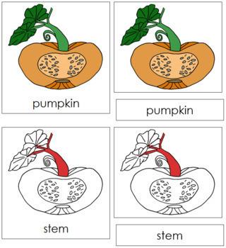 Pumpkin Nomenclature Cards (Red)