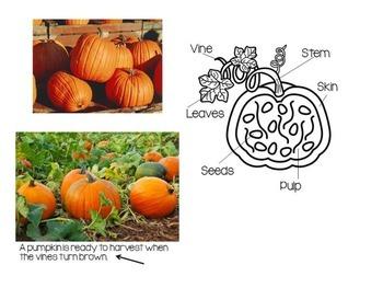 Pumpkin Nonfiction Text Features Book