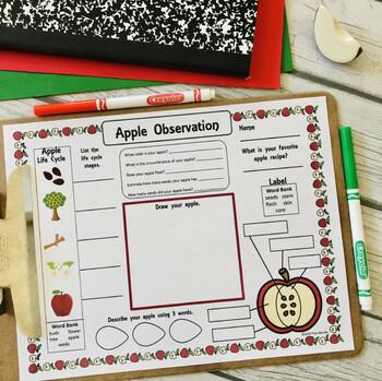 Pumpkin Observation Activity Sheet {FREEBIE}